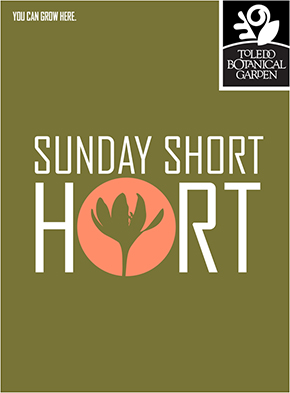 sunday-short-hort-sm